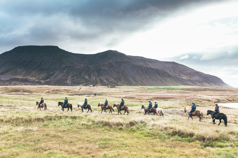 Chosen_Iceland2017_horses-26