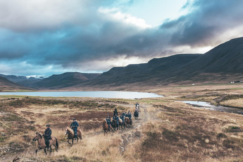 Chosen_Iceland2017_horses-39